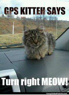 Cat Im In Love Right Meow Meme