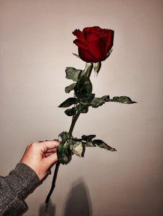 Mg Flower Phone Wallpaper, Tumblr Wallpaper, Flower Wallpaper, Wallpaper Backgrounds, Aesthetic Roses, Red Aesthetic, Aesthetic Photo, Love Rose, My Flower