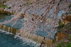 2011 Spring of Seto city-31