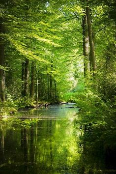 Green beauty in the woods. When it comes to favori... - #beauty #favori #Green #woodland #woods