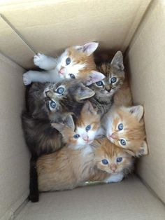 Bunch of cute kittens in a box. Cute Kittens, Cats And Kittens, Ragdoll Kittens, Tabby Cats, Bengal Cats, Cats 101, Siamese Cat, Baby Animals Pictures, Cute Baby Animals