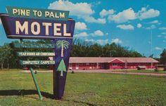 Pine to Palm Motel - Crookston, Minnesota Postcard