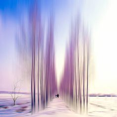 "Saatchi Art Artist Josh Adamski; Photography, ""One man and his dog II"" #art"