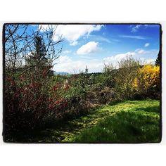 Perfect day for gardening.  Día perfecto para la jardinería.  Www.jessicajlockhart.com.  #coachingenoptimismo #humanology #optimismcoaching #jessicajlockhart #humanología