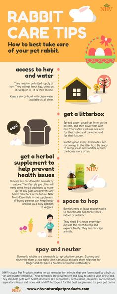 How to best take care of your pet rabbit. Understand some key tips so that you can keep your rabbit healthier for longer. Most of our natural supplements are great for rabbits, ferrets and other smaller animals. Give your rabbits the best natural care possible.