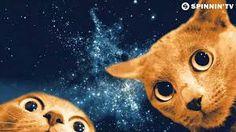 「spacecat」の画像検索結果
