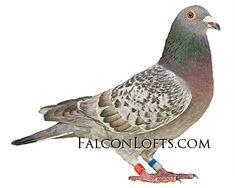Racing Pigeon Lofts, Pigeon Pictures, Pigeon Breeds, Homing Pigeons, Loft Design, Bird, Beautiful, Pigeon, Birds