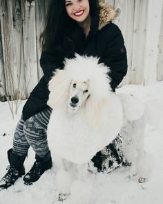 I'm definitely not missing the snow. However  I miss taking pictures of my poodles playing in the snow. I need to be better about taking spring pictures. .. but I'm missing my boys big hair!
