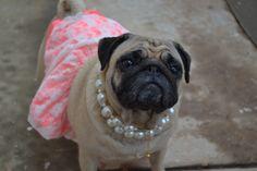 Fancy Chloe Bisou...