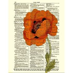 Red Poppy Dictionary Art Print, Poppy Art Print, Red Flower, Book Art,... ❤ liked on Polyvore featuring home, home decor, wall art, flower illustration, flower home decor, poppy illustration, flower stem and floral home decor