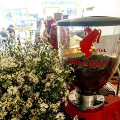 Sun's Out and the aroma of our Julius Meinl Coffee is flowing through our Cafe. Could the day get any better?  #freshbeans#cawfee#juliusmeinl#aroma#coffeebreak#sunshine#beautifulday#coffeeaddict#italiancafe#bellisima#coffeegrinder#red#customerfavourite#coffeeshots#freshflowers#oceangrove#bellarinepeninsula#geelong#geelongbusiness#theterrace by cenzoandco http://ift.tt/1JO3Y6G