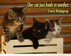 41b0d0b5e0322278265f0f70a0a10632 - Cat Quotes - Quotable Quotes