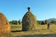 In a valley of the Carpathian Mountains, residents of Breb Romania still grow their own food, make haystacks by hand & dress in traditional clothing. Mall Of America, North America, Carpathian Mountains, Beach Trip, Beach Travel, Royal Caribbean Cruise, London Pubs, Stockholm Sweden, Bucharest