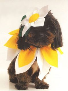 How To Make A Dog Costume – Halloween costumes for dogs Puppy Halloween Costumes, Puppy Costume, Diy Dog Costumes, Animal Costumes, Costume Ideas, Chien Halloween, Costume Fleur, Costume Chien, Diy Pet