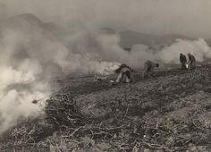 Martin Martinček: Zbieranie zemiakov III.:1960 - 1968