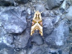 "This photo was sent to us by Reece who writes ""a moth outside my work building in Durham."" Please make sure to visit www.slrhut.co.uk for the best price on your next camera"