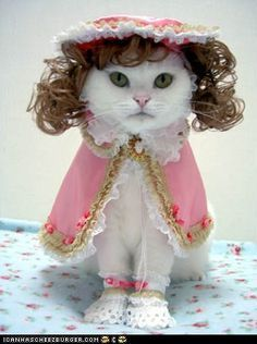 Southern Belle Kitty