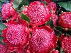 Hermosas flores de color fucsia