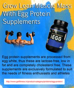 A reliable online store is providing genuine Egg protein at the reasonable prices because of heavy discounted prices. Muscle Building, Build Muscle, B6 B12, Egg Protein, Protein Supplements, Muscle Recovery, Lactose Free, Amino Acids, Cholesterol