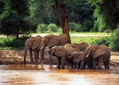 Our collection of affordable Kenya safaris packages are popular. We offer variety of Kenya only customized safari or Kenya and Tanzania combined safaris. Kenya, La Migration, Tanzania Safari, Mombasa, Mountain Climbing, Wedding Card Design, African Safari, East Africa, Bird Watching