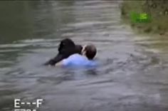 Man Jumps Into Zoo Enclosure To Save A Drowning Chimp