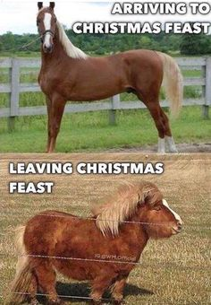 Its the season for stretchy pants. : funny - Horses Funny - Funny Horse Meme - - Its the season for stretchy pants. : funny The post Its the season for stretchy pants. : funny appeared first on Gag Dad. Funny Horse Memes, Funny Horse Pictures, Funny Animal Jokes, Funny Horses, Crazy Funny Memes, Cute Memes, Really Funny Memes, Cute Funny Animals, Funny Dogs