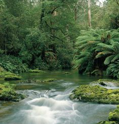 Cumberland River, Great Otway National Park - Victoria, Australia Vic Australia, Victoria Australia, Places To Travel, Places To Go, Cumberland River, Next Holiday, Romantic Vacations, Countries Of The World, Wonders Of The World