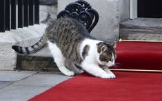 In pictures: David Cameron's cat - Larry, Chief Mouser of Downing ...
