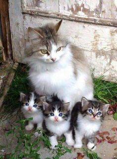 Linda familia ...