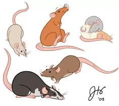 Creative Gifts For Photographers [It doesn't have to be costly] Animal Drawings, Cute Drawings, Rat Toys, Fancy Rat, Cute Rats, Renaissance Art, My Animal, Mammals, Character Design