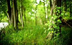 Preview wallpaper wood, tree, leaves, grass, spring, green, maple, young