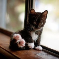 Cutie Patootie !