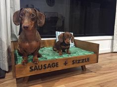 Dachshund Crafts to Make Funny Dachshund, Dachshund Puppies, Weenie Dogs, Dachshund Love, Cute Puppies, Cute Dogs, Daschund, Doggies, Baby Animals