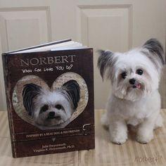 Norbert the dog