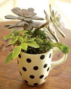 Deko Ideen für den Garten mit Sukkulenten in einer Kaffeetasse