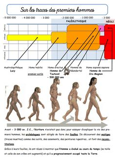 Préhistoire - La classe de Jenny High School French, French Class, Day Camp Activities, Art History Memes, Human Evolution, Class Notes, French Teacher, Science, Learn French