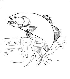 salmon jumping out of water coloring page - Google Search