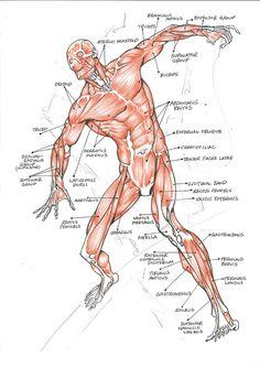 anatoref:     10 steps to improve your figure... - Yuu Shishio
