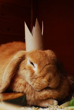 Nothing like a toilet paper tube crown!  When you're tired of it, you can eat it! :)