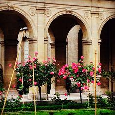 Rose bushes at #museecarnavalet Paris