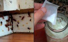 Bunu Evimin Köşelerine Koydum Ertesi Sabah Tüm Hamam Böcekleri Ölmüştü.