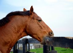 Learn the reasons behind many puzzling horse behaviors and what you can do to…