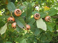 Plant Pictures, Growing Tree, Trees, Fruit, Plants, Food, Tree Structure, Essen, Meals