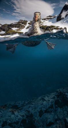 Over/Underwater Split View Birdie