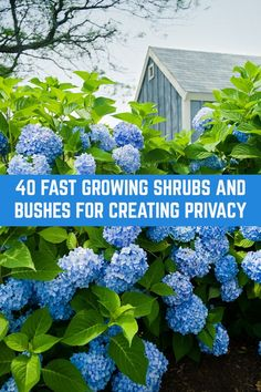 Block nosey neighbors, cut down on noise and grow a natural privacy screen that looks beautiful with these fast growing shrubs and bushes. Fast Growing Privacy Shrubs, Shrubs For Privacy, Bushes And Shrubs, Garden Privacy, Privacy Landscaping, Outdoor Landscaping, Front Yard Landscaping, Planting For Privacy, Backyard Privacy Trees
