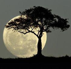92 Prozent der Deutschen glauben, dass der Mond ihr Leben direkt beeinflusst Moon Images, Moon Photos, Moon Pictures, Nature Pictures, Shoot The Moon, Moon Painting, Moon Photography, Moon Lovers, Beautiful Moon