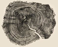 Tree Ring Woodcuts