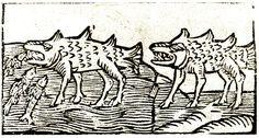 """Wentusy, dzikie bestie. Bartosz Paprocki """"Koło rycerskie""""; Kraków po r. 1575."""