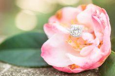 Norfolk Botanical Gardens Engagements   Virginia Wedding Photographer   Audrey Rose Photography