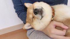 今日は私の手の中で寝てくれましたー... more #Regram via @yuzu_n0003